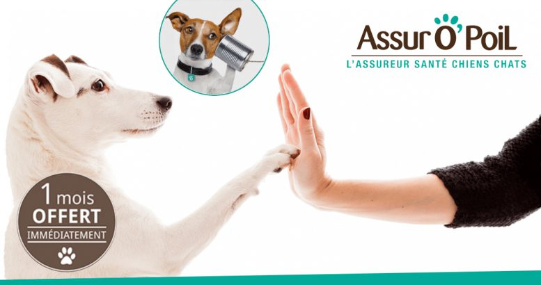 assurance animaux assuropoil