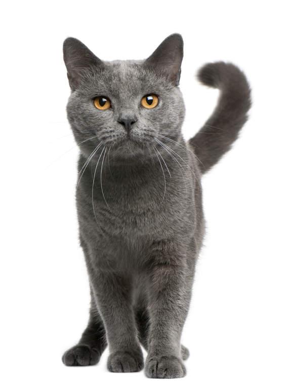 assurance pour chat belgique