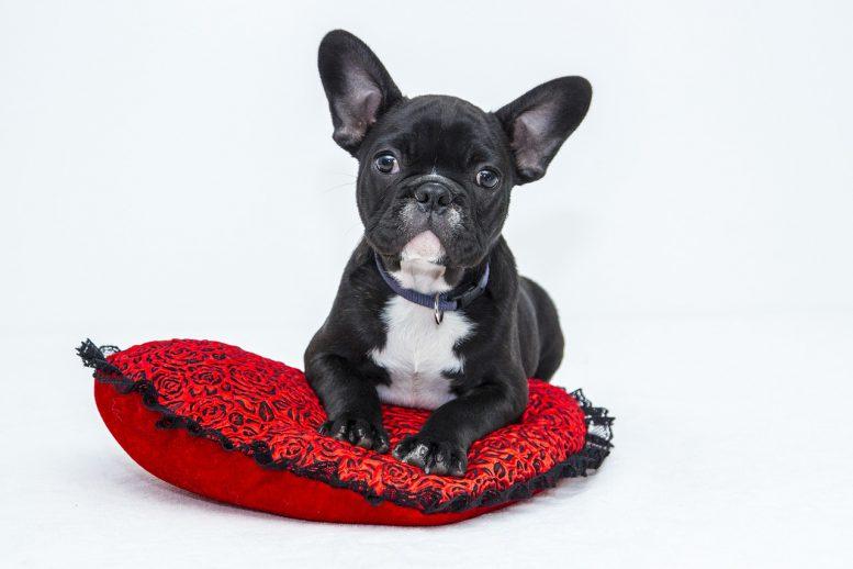 assurance pour chien en belgique