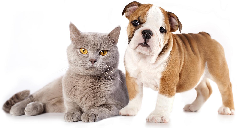 Assurance animaux belgique