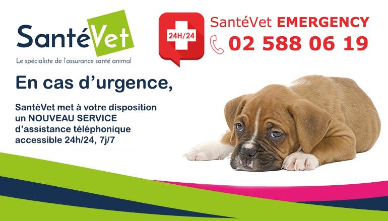 santévet emergency