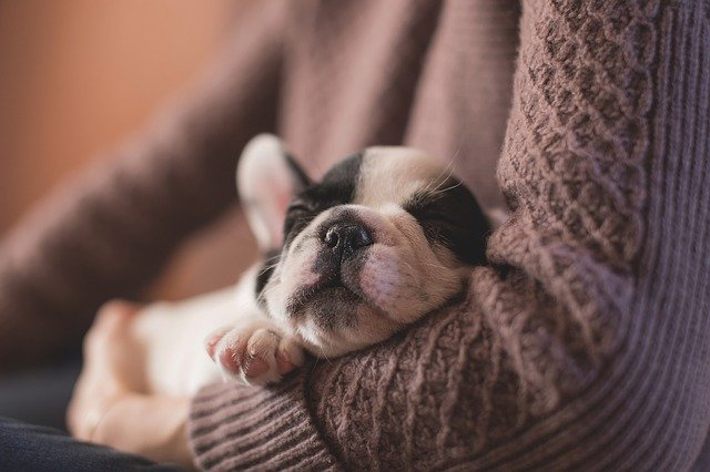 3 raisons de prendre une assurance pour chien